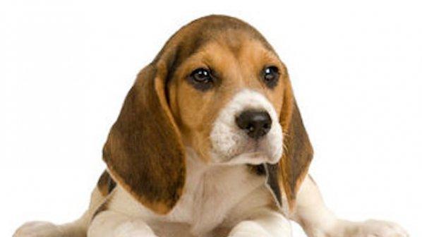 До собствениците на домашни кучета